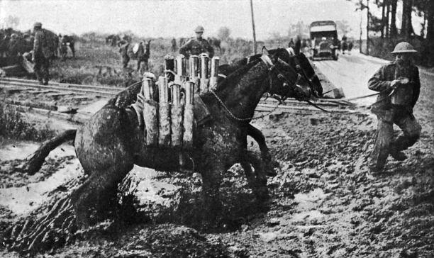 caballo11