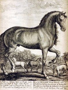 caballo19