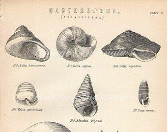 Historia de los caracoles en la alimentaci n m s 22 formas for Caracol de jardin de que se alimenta