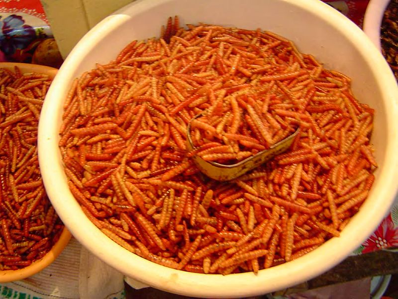 Gusanos rojos comestibles de maguey