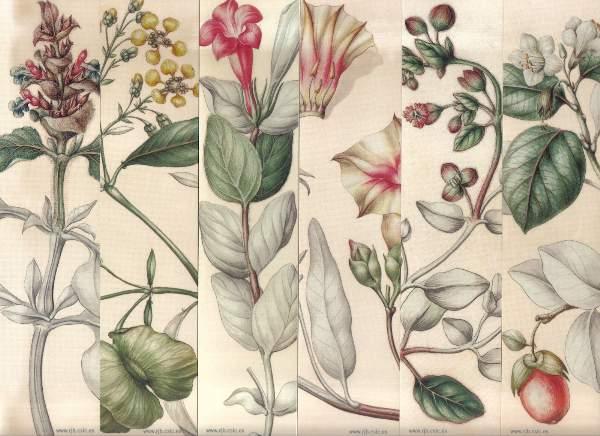 Jos celestino mutis y los alimentos historia de la for Libros de botanica pdf