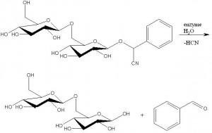 Amigdaline_hydrolysis