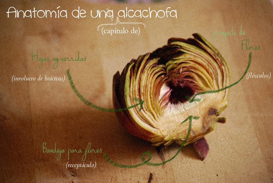 anatomia-alcachofa-signed