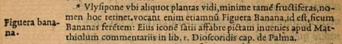 Figuera-banana-Clusius