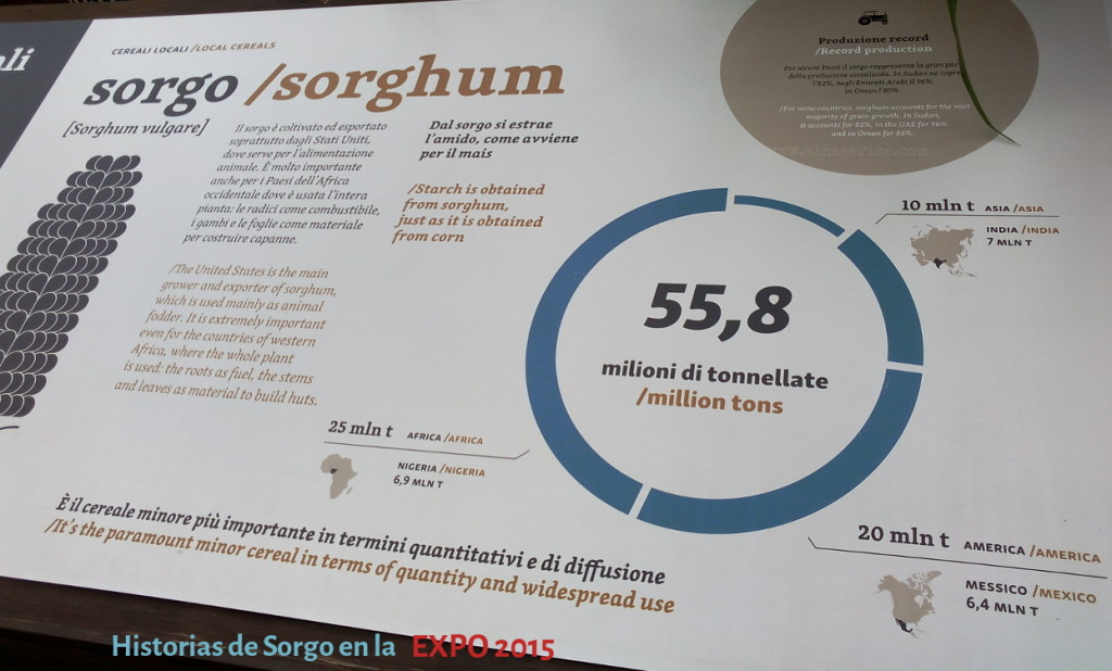 sorghum-EXPO